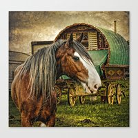 The Gypsy Vanner Canvas Print
