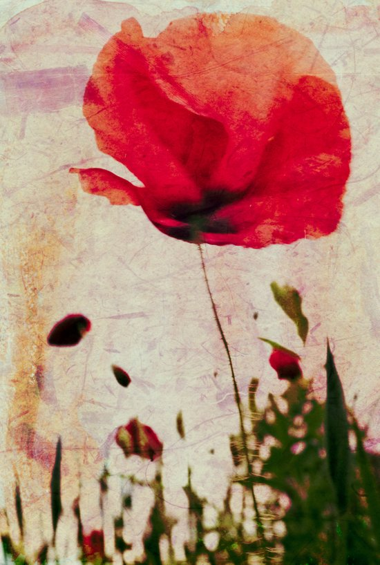 Heavy Poppy Art Print