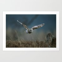 TAWNY OWL IN FLIGHT Art Print