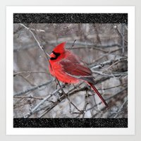 The Snow Cardinal Art Print