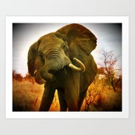 Mad Elephant Art Print