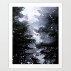 Morning Fog in the Woods Art Print