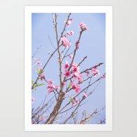 Art Print featuring Portuguese Blossoms by Yolene Dabreteau Photography