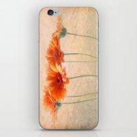 Orange Gerberas iPhone & iPod Skin