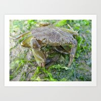 Crab And Seaweed On The … Art Print