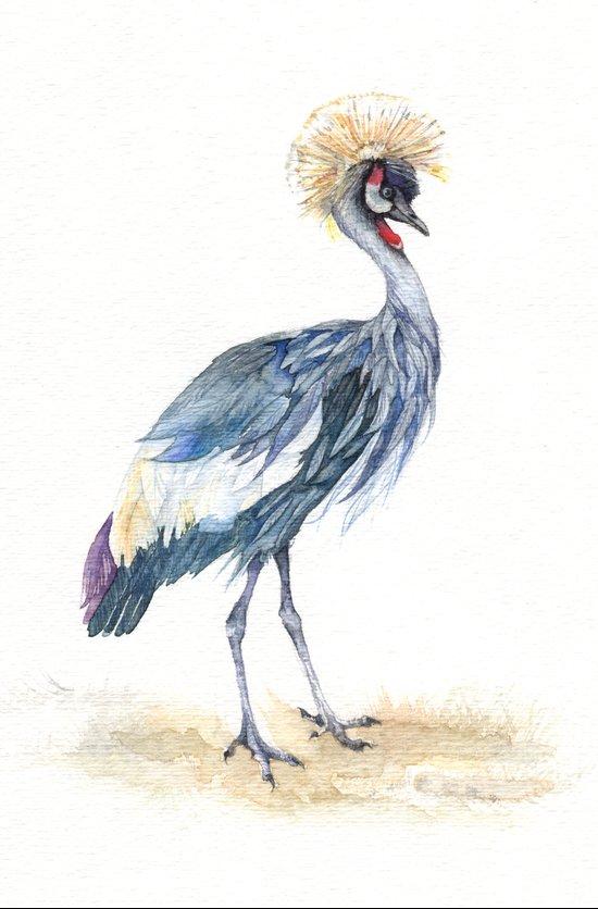 Grey Crowned Crane Bird  Art Print