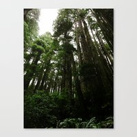 Redwoods #1 Canvas Print
