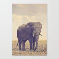 The Biggest Elephant in Botswana Canvas Print