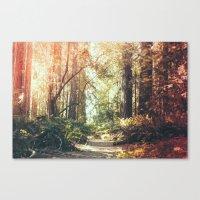 Beautiful California Redwoods Canvas Print