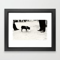 Dog On The Street Framed Art Print