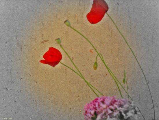 as cardboard poppies Art Print