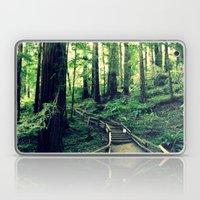 Muir Woods Path Laptop & iPad Skin