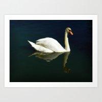 Beautiful Swan Art Print