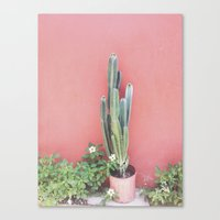 Costa Rica Cacti Canvas Print