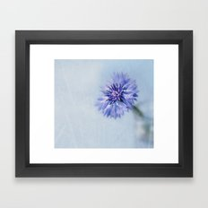Cornflower Dreams Framed Art Print