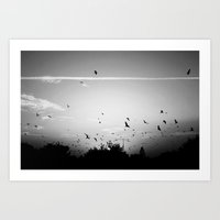 Migrating birds #02 Art Print