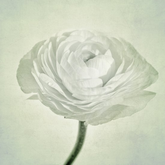 whity Art Print
