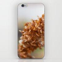 Winter Hydrangea II iPhone & iPod Skin