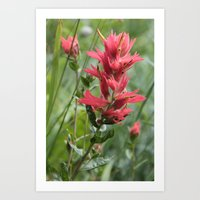 Indian Paint Brush Art Print