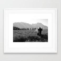 Lone Buffalo Framed Art Print