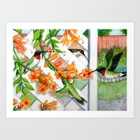 Hummingbirds and Trumpet Vines Art Print