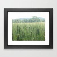 Spring wheat Framed Art Print