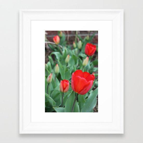 Tulip Darlings Framed Art Print