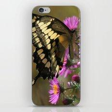 Giant Swallowtail (Papilio cresphontes) iPhone & iPod Skin