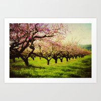 Orchard Lane Art Print