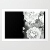 Half roses Art Print