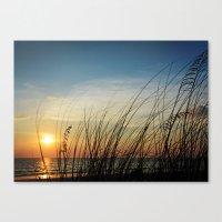Sunset through the sea weeds Canvas Print