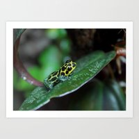 Poison Dart Frog R. Imit… Art Print