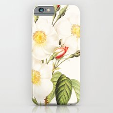 III. Vintage Flowers Botanical Print by Pierre-Joseph Redouté - Rosa Damascena Subalba Slim Case iPhone 6s