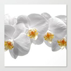 white orchid II Canvas Print