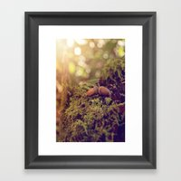 ACORNS Framed Art Print