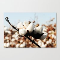 Southern Snow Canvas Print