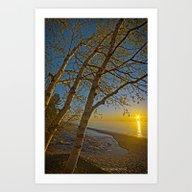 A Birch Tree Sunset Art Print