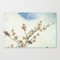 Stretching Cherry Blossom Canvas Print