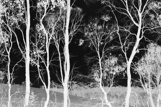 Bush Spirits Art Print