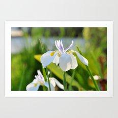 Gleamin' Iris Art Print