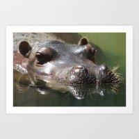 Hippopotamus II Art Print