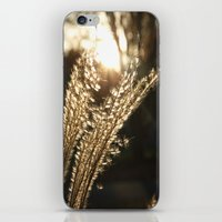 Grasses in the Sun iPhone & iPod Skin