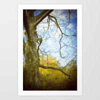 Oak Run Art Print