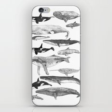 Cetology iPhone & iPod Skin