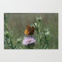 Canvas Print featuring Aphrodite Fritillary  by Ornithology