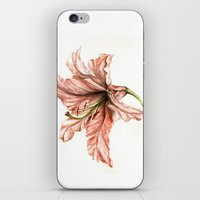 Pink Lily Flower Watercolor iPhone & iPod Skin