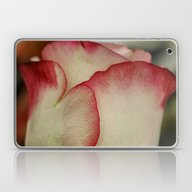 Peppermint Rose Laptop & iPad Skin