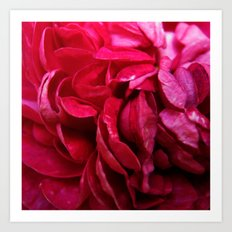 rosy petals Art Print