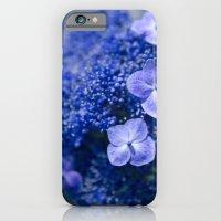 Lacecap Hydrangea macrophylla serrata Blue iPhone 6 Slim Case