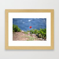 Spring Papaver 889 Framed Art Print